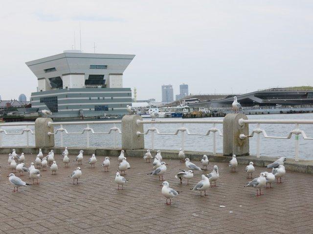 横浜ホビーフォーラム(1)